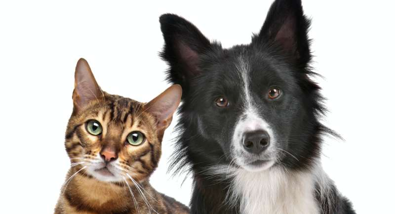 Close up portrait of dog and cat